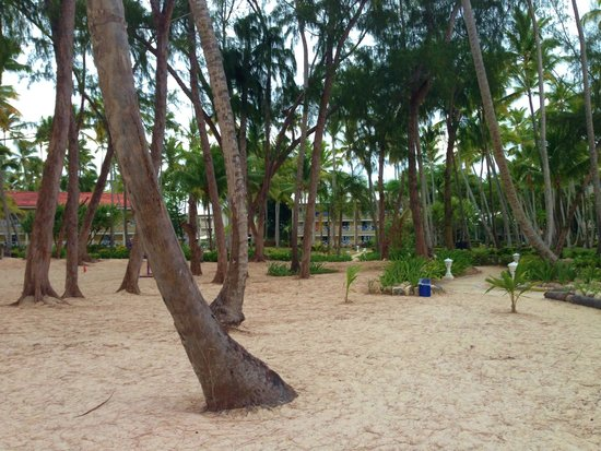Vista Sol Punta Cana: Beautiful beach with palm trees