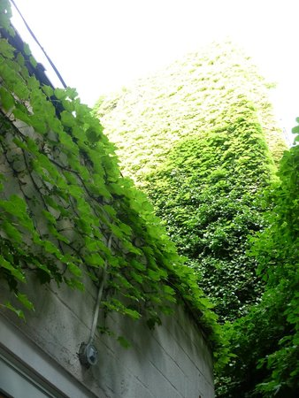 Cafe Grumpy: look up! the green walls of the courtyard