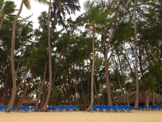 Vista Sol Punta Cana : Beautiful grounds