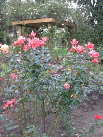 Jardin Botanico Jose Celestino Mutis: jardim botanico