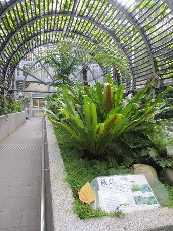 Hong Kong Zoo Botanical Gardens Picture Of Hong Kong Zoological And Botanical Gardens Hong