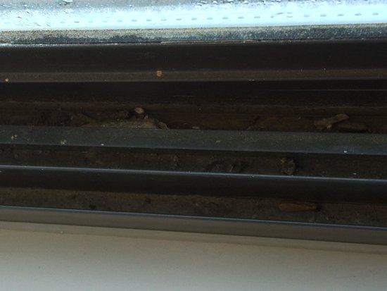 La Quinta Inn & Suites Memphis East-Sycamore View : Window sill w. dead bugs