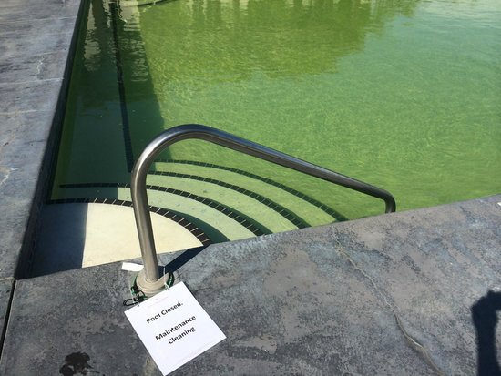 Walnut Beach Resort: Pool closed due to algae