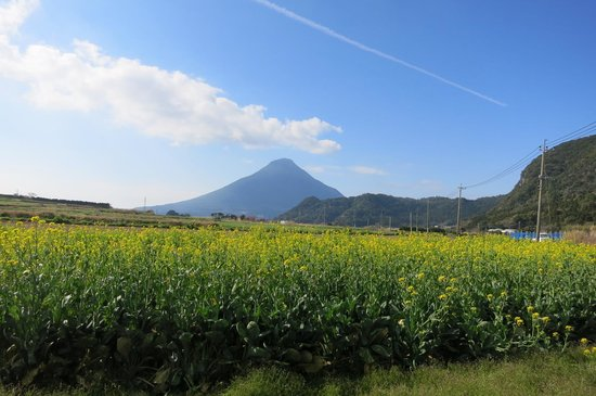 Mt. Kaimondake: 菜の花と開聞岳