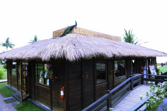 Bagan Thiripyitsaya Sanctuary Resort : Our Peacock Chilling on top of the Suvenior Shop
