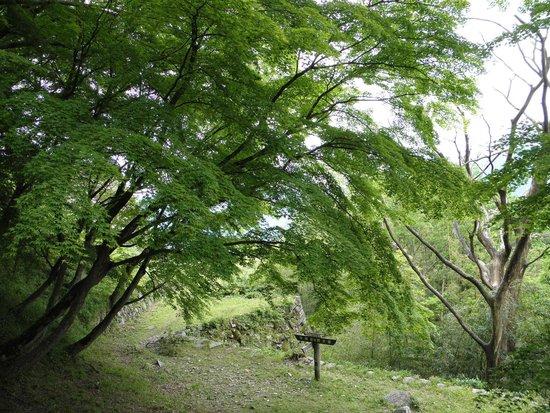Tsuwano Castle: 紅葉が待ち遠しい