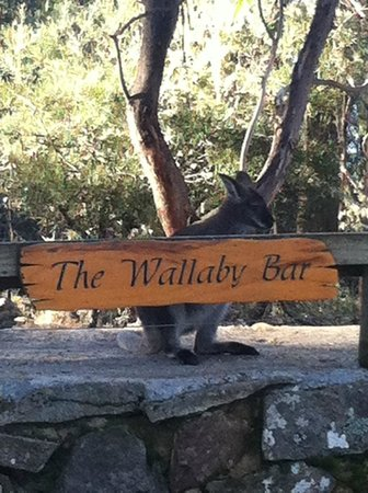 Blue Lake Lodge: THE WALLABY BAR...