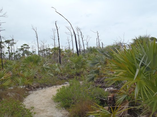 National Key Deer Refuge: one of the trails - looked like this the entire way
