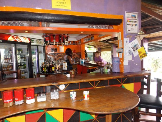 Jungle Monkey Backpackers: at the bar