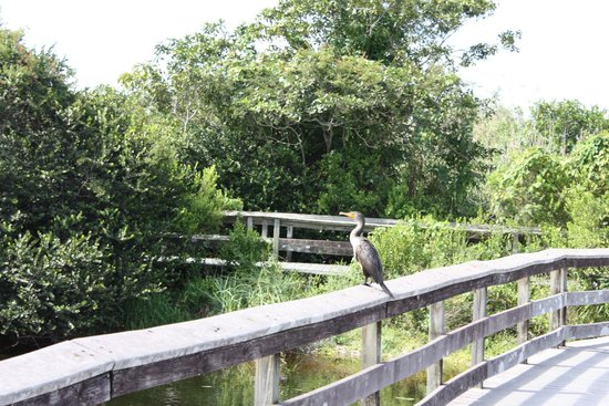 Anhinga Trail: lots of birds around