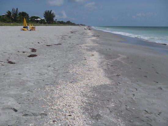 Captiva Beach: shells on the beach