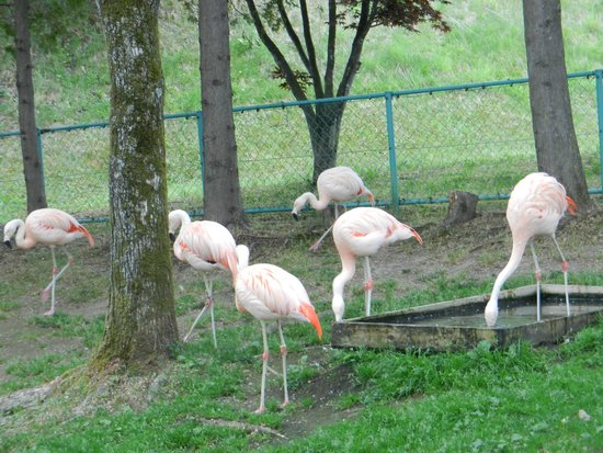 овцы - Picture of Asahiyama Zoo, Asahikawa - TripAdvisor