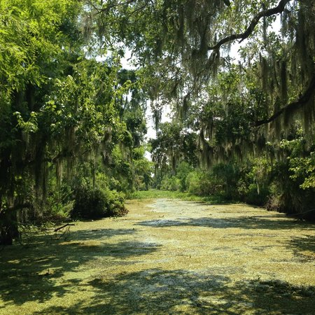 Airboat Adventures : The Bayou!
