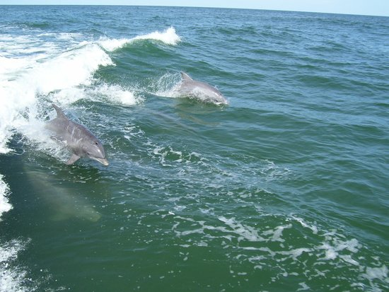 Thundercat Dolphin Watch: While moving dolphins following