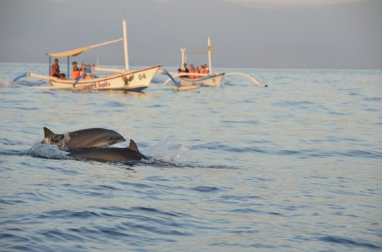 Lovina Beach : dolphins of Lovina
