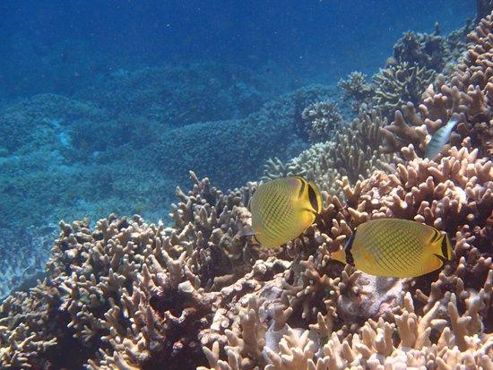 Lovina Beach : snorkelling at Menjaran Island