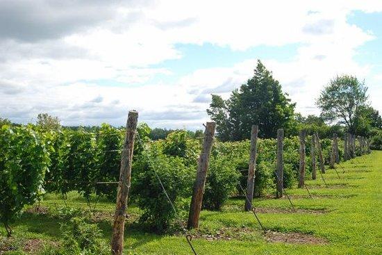 Annapolis Highland Vineyards: Fields in summer