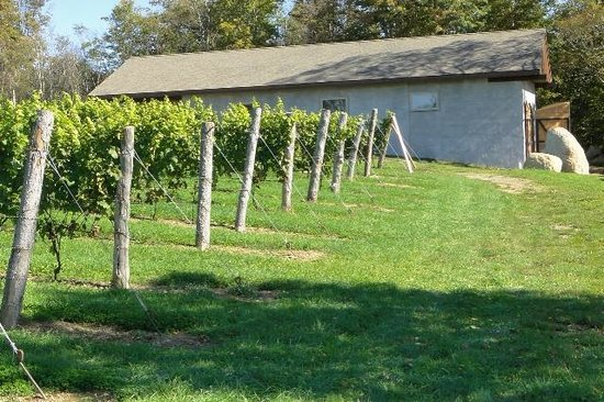 Annapolis Highland Vineyards: View of row ends in summer