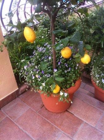 Hotel California: Hotel lemons