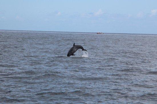 Abeque Turismo Activo : Saut d'un dauphin
