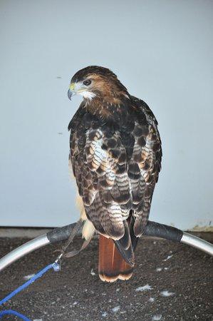 Loch Lomond Bird of Prey Centre: bird of prey center 2