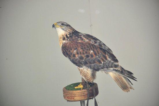 Loch Lomond Bird of Prey Centre: bird of prey center 3