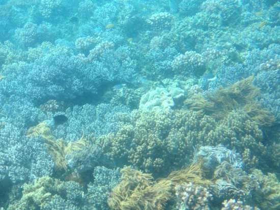Big Cat Green Island Reef Cruises - Day Tour: Coral view from inside sub