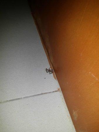 Legian Kriyamaha Villa : Dead Spider in the Bathroom