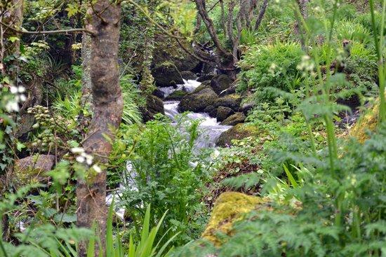Lamorna Cove: Lamorna stream gurgles