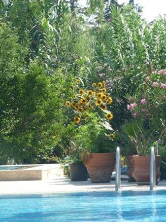 Dalyan Garden Pension : Garden and pool