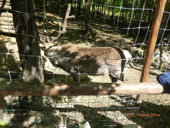 Renna Foto Di Giardino Zoologico Di Pistoia Pistoia