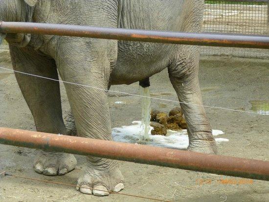 Giardino Zoologico di Pistoia : pisciata e cacata