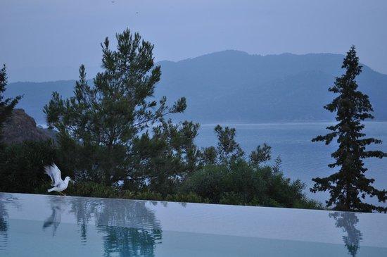 D-Hotel Maris: Swimming pool