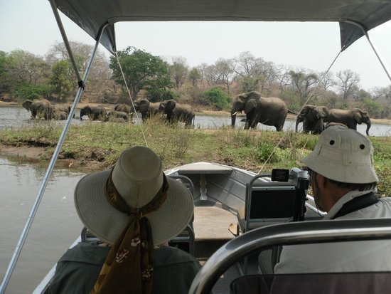 Mkulumadzi Lodge: Elephants during boat safari