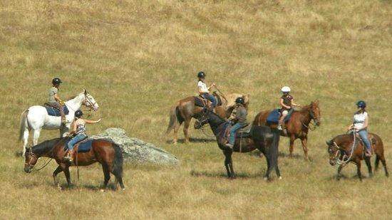 Cloverleaf Ranch