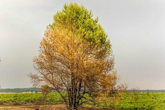 De Hoge Veluwe National Park: в парке