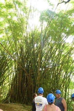 Kauai Backcountry Adventures: Nature walking
