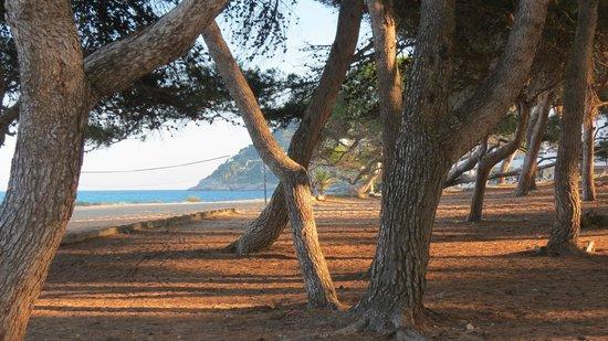 Hotel Mayurca: Playa