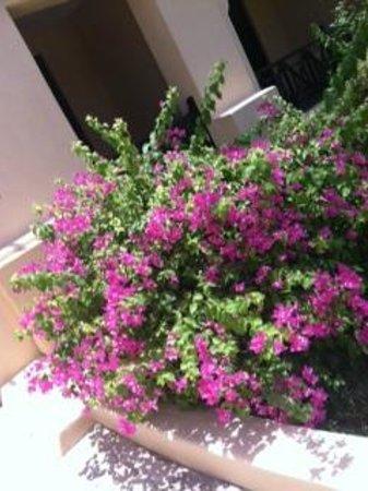 Novotel Bahrain Al Dana Resort: Beautiful flowers on the grounds