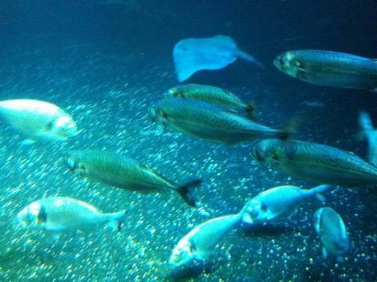 Aquarium de Paris - CineAqua: alcuni pesci