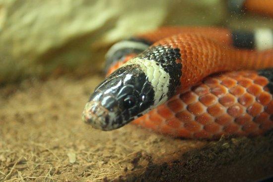 Albergue Juvenil de Cordoba: Zoológico