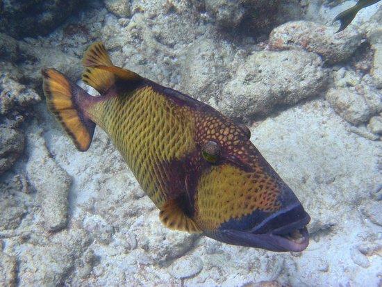 Kurumba Maldives : Чудесный риф и снорклинг