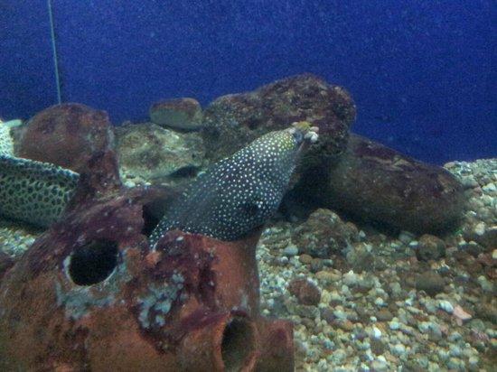 Matsyadarshini Aquarium: Moray eel