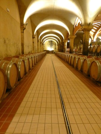 My Tuscan Wine And Tours: San Fabiano Cascinaias vinkjeller