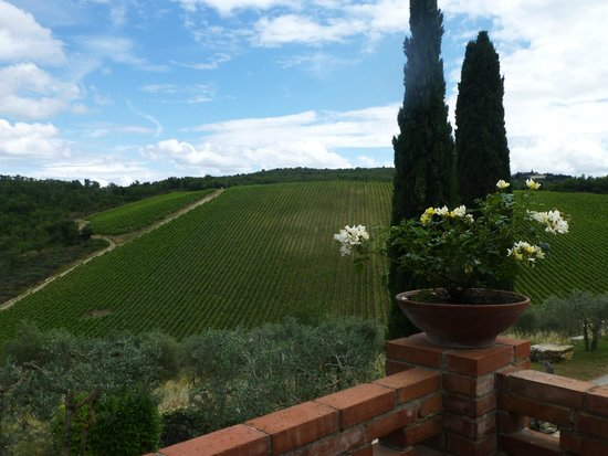 My Tuscan Wine And Tours: Utsikt fra Querceto de Castellina