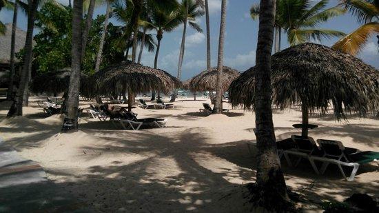 Viva Wyndham Dominicus Beach: Spiaggia