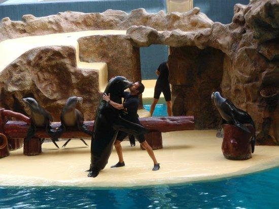 Loro Parque : Show de las focas
