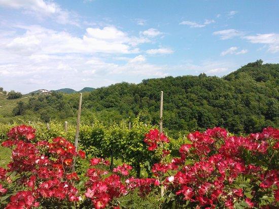 Agriturismo Vedova: vista