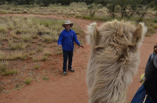 Camels Australia: Great tour guide and camel handler