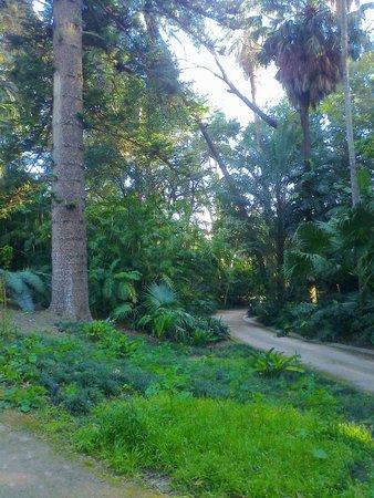 Jardin Botanico Historico La Concepcion : Uno de los caminos